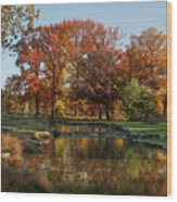 The Rich Autumn Colors In Forest Park. Wood Print