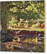 The River Lin , Bradgate Park Wood Print