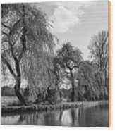 The River Wey,guildford, Surrey,england  Wood Print