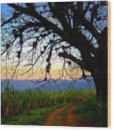 The Road Less Traveled Wood Print by Skip Hunt