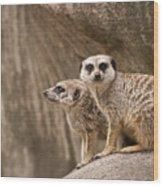 The Rock Of Meerkats Wood Print