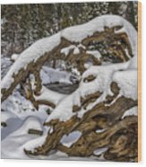 The Roots Of Winter Wood Print