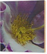 The Rose Bowl Wood Print