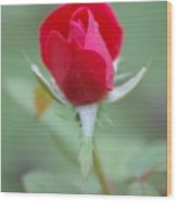 The Rosebud Wood Print