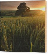 The Rural Sunset Wood Print
