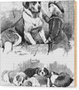 The Saint Bernard Club Dog Show Wood Print