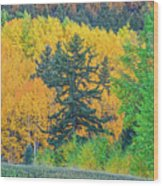 The Sanctity Of Nature Reified Through A Photographic Image  Wood Print