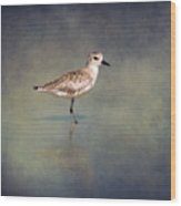 The Sanderling 2 By Darrell Hutto Wood Print