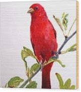 The Scarlett Tanager  Wood Print