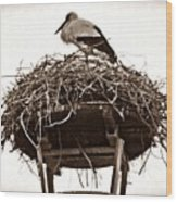 The Schierstein Stork Sepia Wood Print