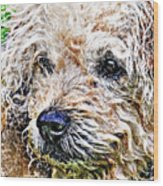 The Scruffiest Dog In The World Wood Print