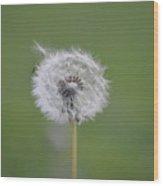 The Seedling Wood Print