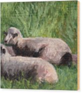 The Sheep Are Resting Wood Print