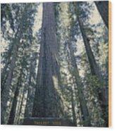 The Shenandoah National Forest Wood Print