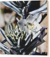 The Shy Desert Lily Wood Print