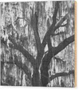 The Silver Tree Wood Print
