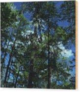The Skyline Of Susan Creek Indian Mounds Wood Print