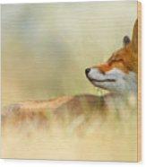 The Sleeping Beauty - Wild Red Fox Wood Print