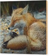 The Sleepy Fox Wood Print