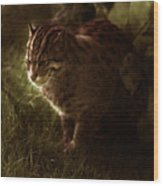 The Sleepy Wild Cat Wood Print