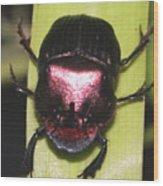 The Smiling Beetle Bug-debbie-may Wood Print