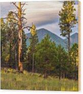 The Snag Wood Print