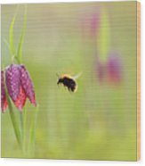 The Snake's Head And The Bumblebee - Fritillaria Meleagris Wood Print