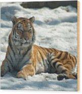 The Snowy Lion Wood Print