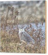The Snowy Owl Wood Print
