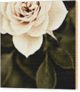 The Softest Rose Wood Print