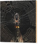 The Spider  And The Fly Wood Print