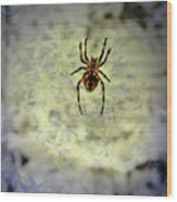 The Spider Waits Wood Print