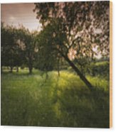 The Spring Orchard Wood Print