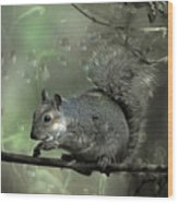 The Squirrel Wood Print