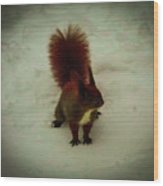 The Squirrel In The Winter Garden Wood Print