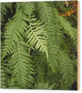 The Standout Fern Wood Print