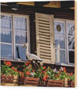 The Stork Has A Delivery - Colmar France Wood Print