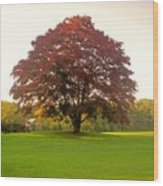 The Storybook Tree Wood Print