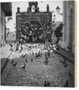 The Street Pigeons Wood Print by Perry Webster