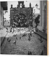 The Street Pigeons Wood Print