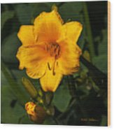 The Summer Blooms Wood Print