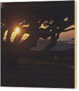 The Sun Peeks Through The Branches Wood Print