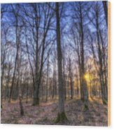 The Sun Ray Forest Wood Print