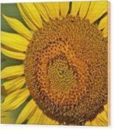 The Sunflower And The Bee Wood Print
