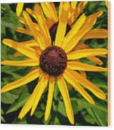 The Sunny Side Of Life Wood Print