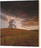 The Sunset Of The Poppies - 2 Wood Print