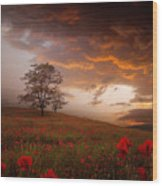 The Sunset Of The Poppies Wood Print