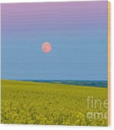The Supermoon Rising Above A Canola Wood Print