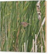 The Swamp Sparrow In-flight Wood Print