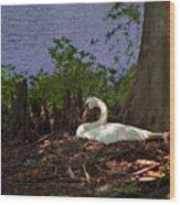 The Swan Wood Print